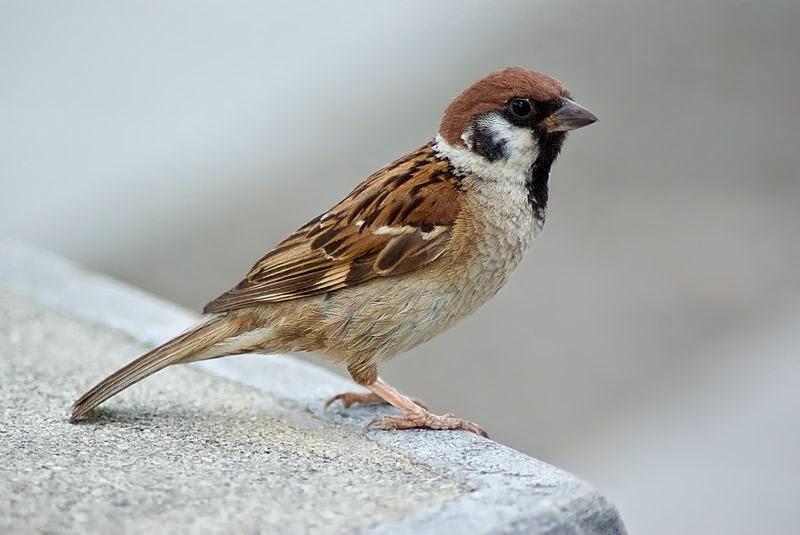 Burung Burung Emprit Udar Aksara